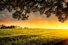 Agriculture, Clouds, Cropland Royalty Free Stock Image
