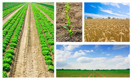 Agriculture collage Royalty Free Stock Photography