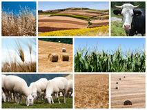 Agriculture collage. A collage of photos about agriculture theme royalty free stock image