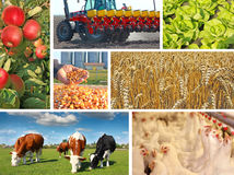 Agriculture - collage Photographie stock