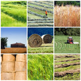 Agriculture collage. A nice collage with agriculture motives - tractors, fields, lands, produce, farm, hay Stock Photography