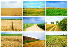 Agriculture. Collage of agriculture fields and landscapes in summertime, wheat, corn, roads Royalty Free Stock Photography