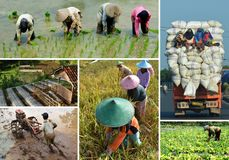 Agriculture collage Stock Images