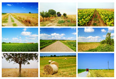 Agriculture collage. In summertime - fields, landscapes, roads, harvest, farms Royalty Free Stock Photos