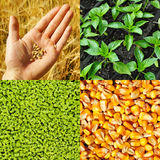 Agriculture, concept collection Royalty Free Stock Image