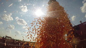 Agriculture Concept, Corn Harvest stock video footage