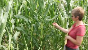 Agriculture corn plant stock footage