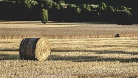 Agriculture, Country, Countryside Royalty Free Stock Photo