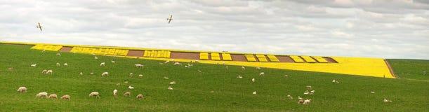 Agriculture créative de Canola Images libres de droits