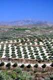 Agriculture in Crete, Greece. Stock Images