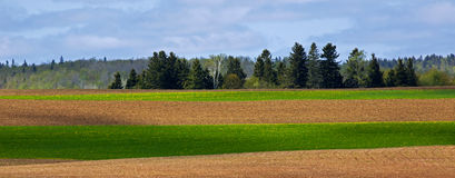 Agriculture Crop Cultivation Green Brown Royalty Free Stock Photography