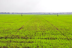Agriculture Crop Fields. Green rows of plants and an irrigation machine royalty free stock photography
