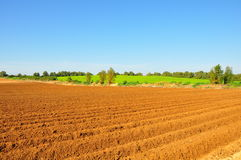 Agriculture Crop Fields. Rows of crop with green meadow on a sunny day royalty free stock photography
