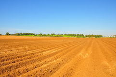 Agriculture Crop Fields Royalty Free Stock Image