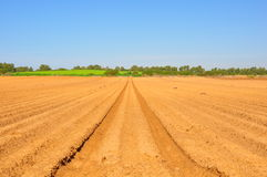Agriculture Crop Fields. Rows of crop on a sunny day stock photos