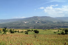 Agriculture and crop fields in Ethiopia Stock Image