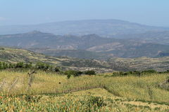 Agriculture and crop fields in Ethiopia Stock Photos