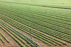 Agriculture, cultivated field Stock Photos