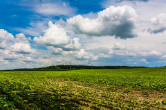 Agriculture Damage. Green field damaged by hail Royalty Free Stock Photography