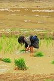 Agriculture dans le domaine photo stock