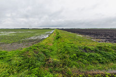 Agriculture dans le polder. Photo stock