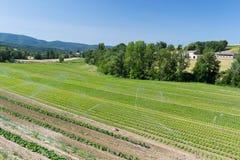 Agriculture dans les sud des Frances Image libre de droits