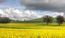 Agriculture de Canolo dans Cowra Image libre de droits