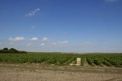 Agriculture de courge Image libre de droits
