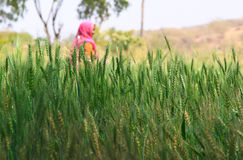 Agriculture de femme Image stock