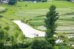 Agriculture de la saison Photo stock