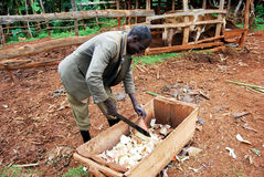 Agriculture de subsistance en Ouganda oriental photo libre de droits