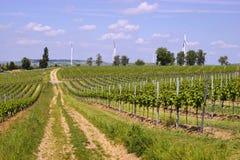 Agriculture de vin dans Rhin-Hesse dans le printemps, Allemagne Image stock