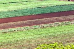 Agriculture des collectes de légumes Images libres de droits