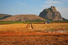 Agriculture des exécutions Photos stock