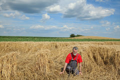 Agriculture, desperate farmer in damaged wheat field Stock Photos