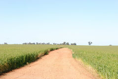 Agriculture. A dirt road between 2 ceral crops with trees and blue sky Stock Images