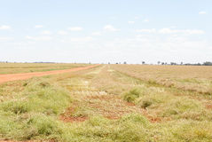 Agriculture. A dirt road beside a windrow canola crop on a sunny day Stock Photos