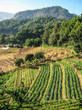Agriculture in Doi Inthanon National Park Stock Images