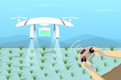 Agriculture Drone fly on paddy by remote control. Vector royalty free illustration