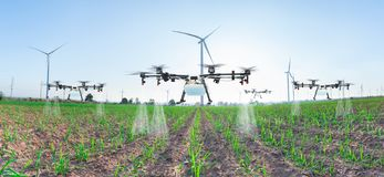 Free Agriculture Drone Fly To Spray Fertilizer On Panorama Sugarcane Fields, Smart Farm 4.0 Concept Stock Photo - 139968110