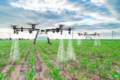 Agriculture drone fly to sprayed fertilizer on the corn fields.  Stock Photo