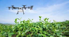 Free Agriculture Drone Fly To Sprayed Fertilizer On The Green Tea Fields, Smart Farm 4.0 Concept Royalty Free Stock Image - 139967196