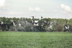 Agriculture drone fly to sprayed fertilizer on the rice fields. Royalty Free Stock Photo