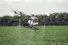Agriculture drone fly to sprayed fertilizer on the rice fields. Stock Image