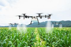 Agriculture drone fly to sprayed fertilizer on the sweet corn fields.  stock photography