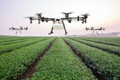 Agriculture drone flying on the green tea field at sunrise.  Royalty Free Stock Images