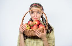 Agriculture du concept Dents saines Femme heureuse mangeant Apple verger, fille de jardinier avec le panier de pomme R?colte de r image libre de droits