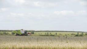Agriculture du fonctionnement de moissonneuse de combaine sur le grand champ, moissonneuse sur le champ, combaine vert travaillan clips vidéos