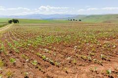 Agriculture du paysage de cultures photographie stock