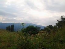 Agriculture et forêts Photo libre de droits